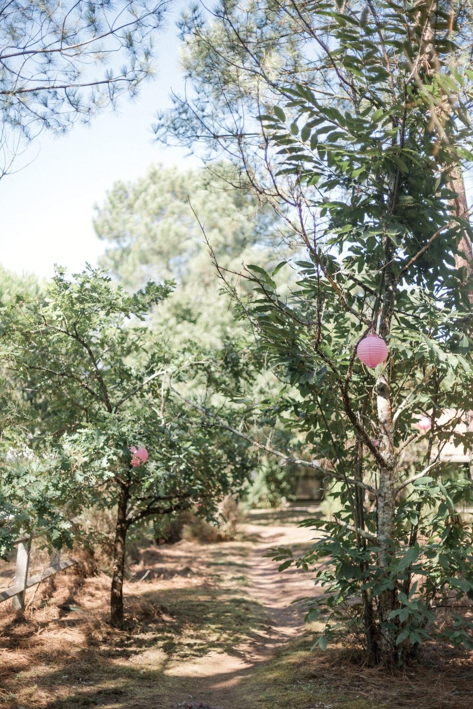 photo d'un chemin dans les pins